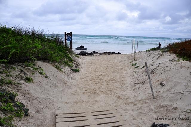 Tortoise bay