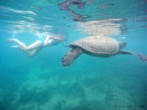 Snorkelling at Tintorera