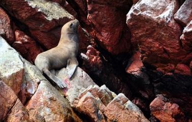 Bleeding sea lion :(
