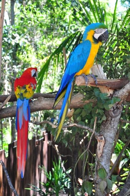 More parrots