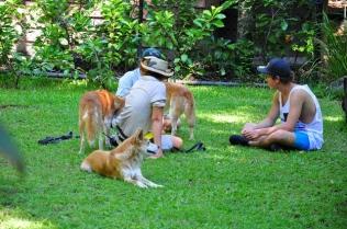 Meeting dingos