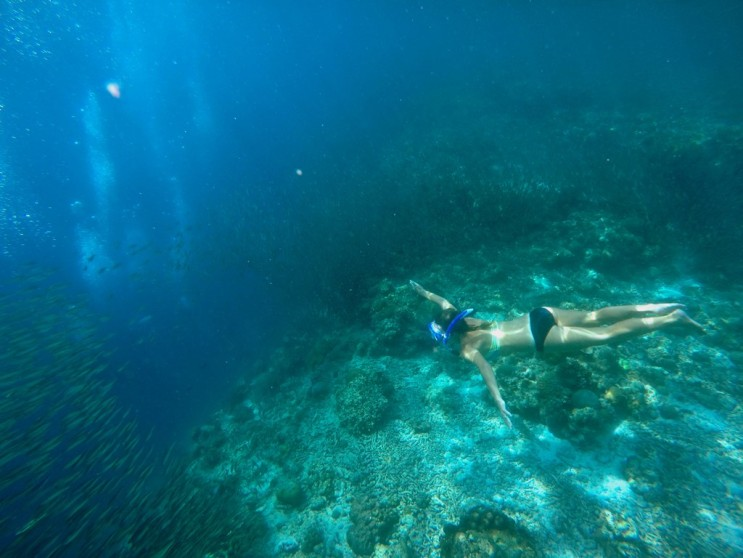 Chasing the Sardines