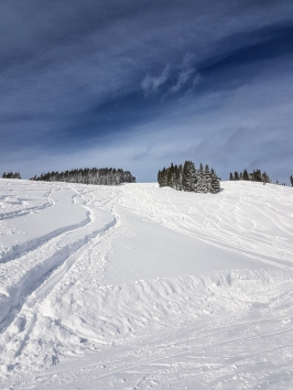 Powder heaven in Saalbach