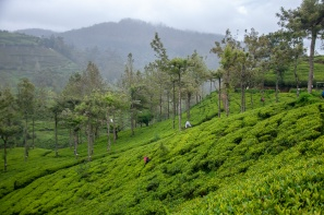 nuwara eliya (4 of 1)