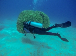 Eilat diving