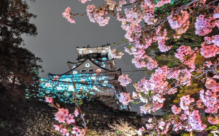 sakura kochi
