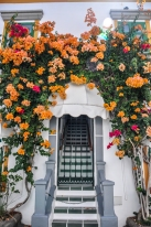 Puerto de Mogan flowers